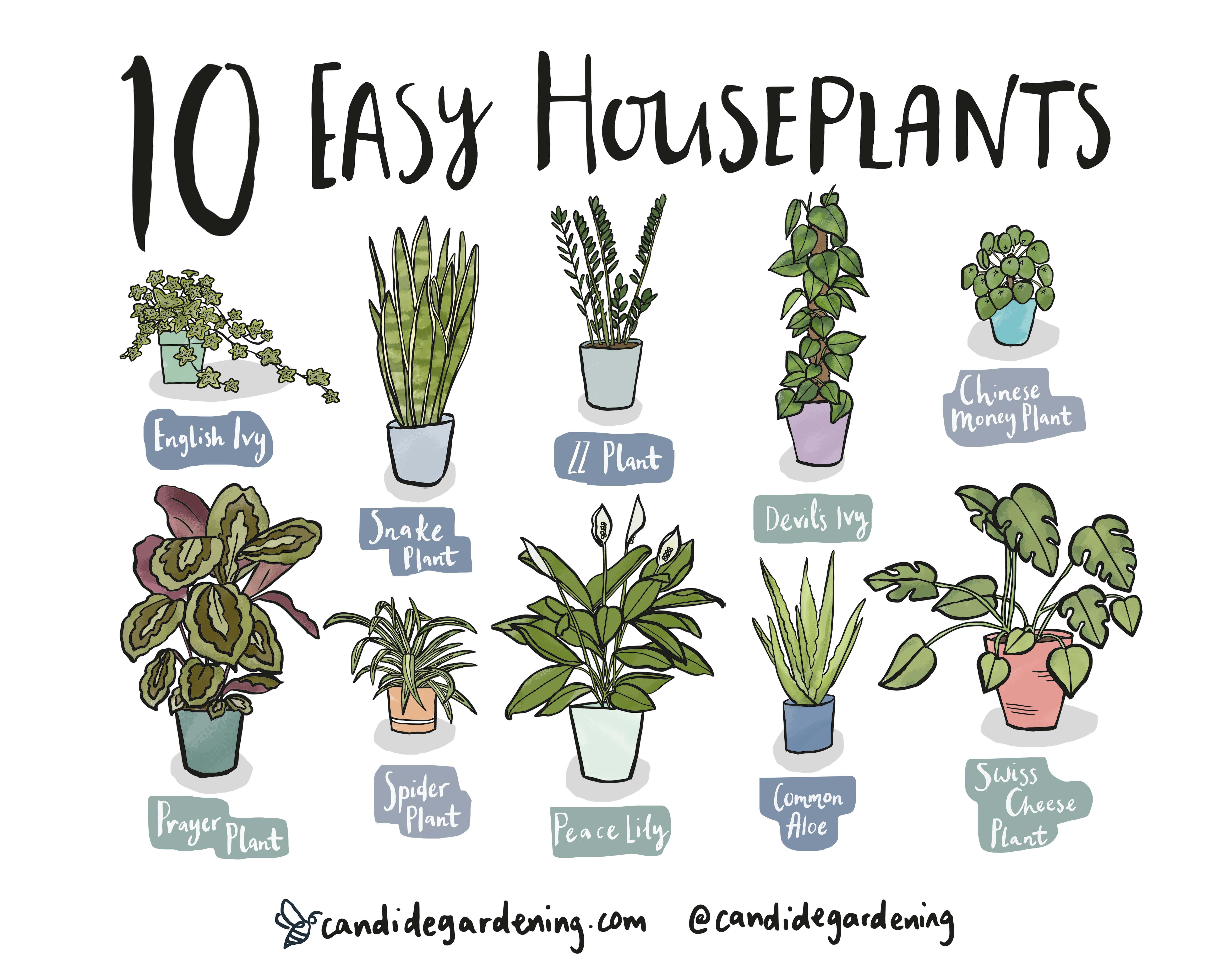 10 Houseplants That Are Actually Easy To Keep Alive Discover Candide Gardening